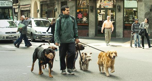 paseando perros
