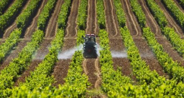 Campos de agricultura