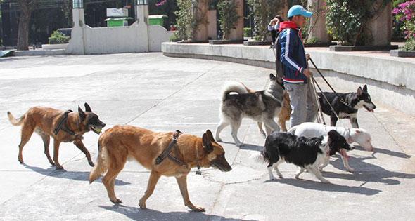 pasear perros en CDMX
