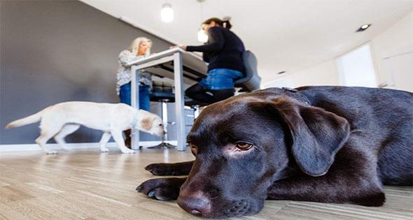 Empresas que te permiten llevar a tu perro a la oficina