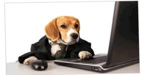 Las mascotas pueden hacerte tener ingresos extras